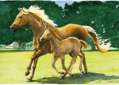 Joni's Horses