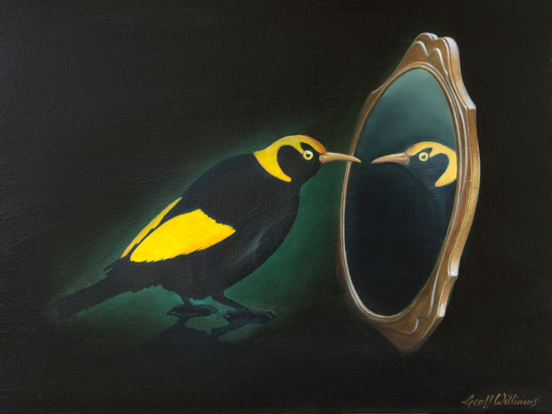 Regent Bowerbird - 2010 Oils on Red Cedar